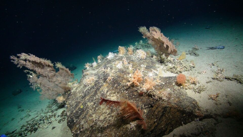An outcrop of rock makes a perfect home for many different cold water co...